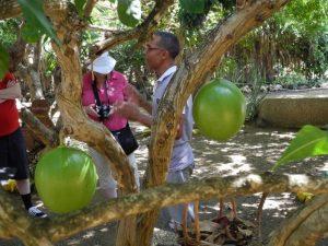 Visite d'un jardin - Calebas