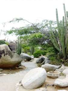 Jardin de cactus et de roches