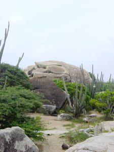 Montagne de roches et cactus