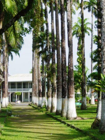 L'Allée de palmiers