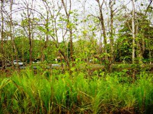 Végétation vue depuis le train