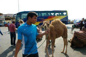 Pays du chameau
