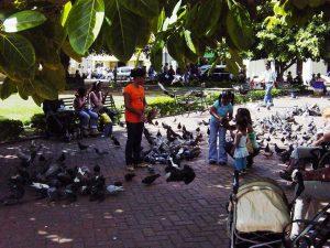 Les enfants et les pigeons