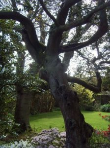 Dans le jardin de la maison Haute-Ville (Victor Hugo)