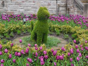 Jardin du chateau de Belfast